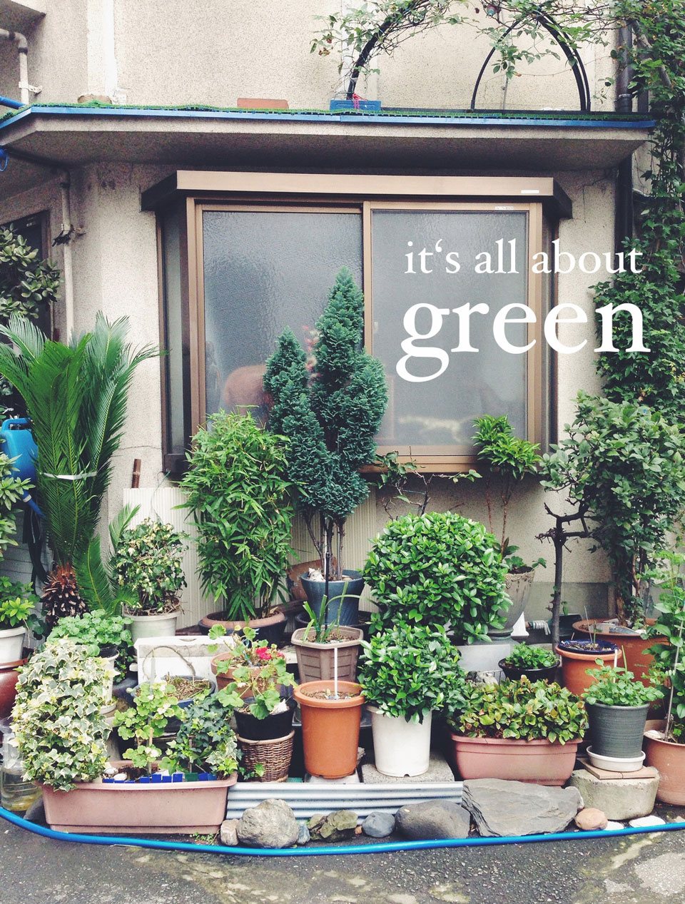 I just love who people put plants in from of their houses to make everything more green even in the city