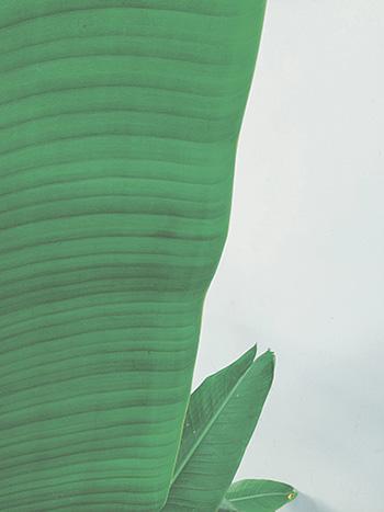 palmtree-thumb